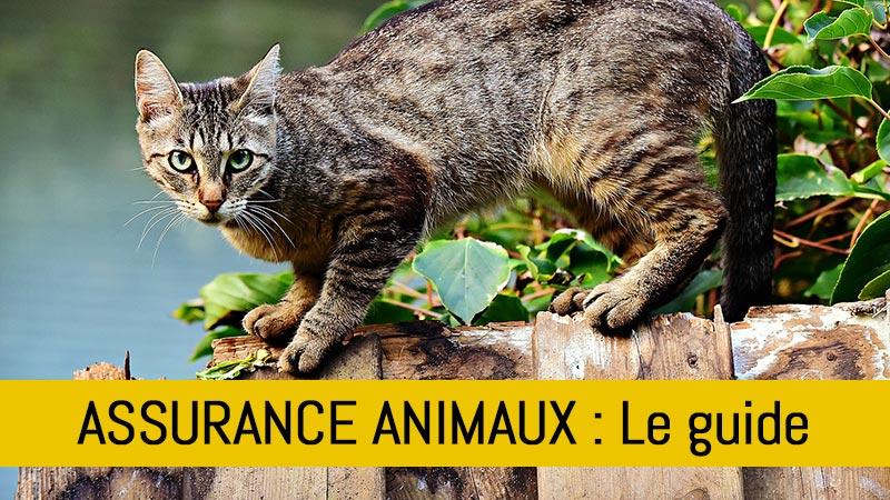 assurance-animaux-faut-il-assurer-son-animal-de-compagnie