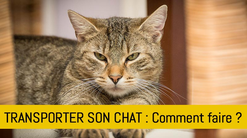 comment-transporter-son-chat