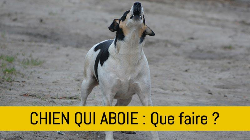 mon-chien-aboie-trop-que-faire