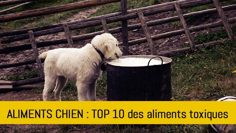 top-10-aliments-a-ne-pas-donner-chien