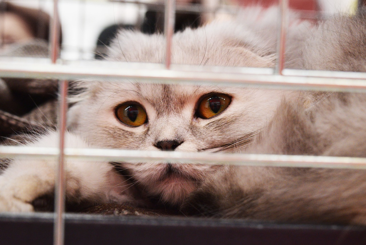 Transporter son chat dans un panier de transport