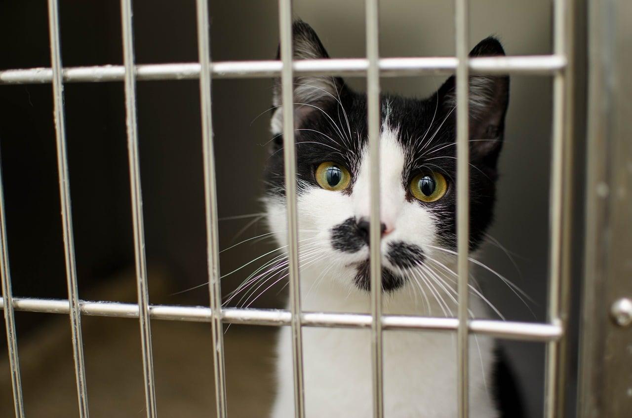 Transporter son chat dans une cage de transport