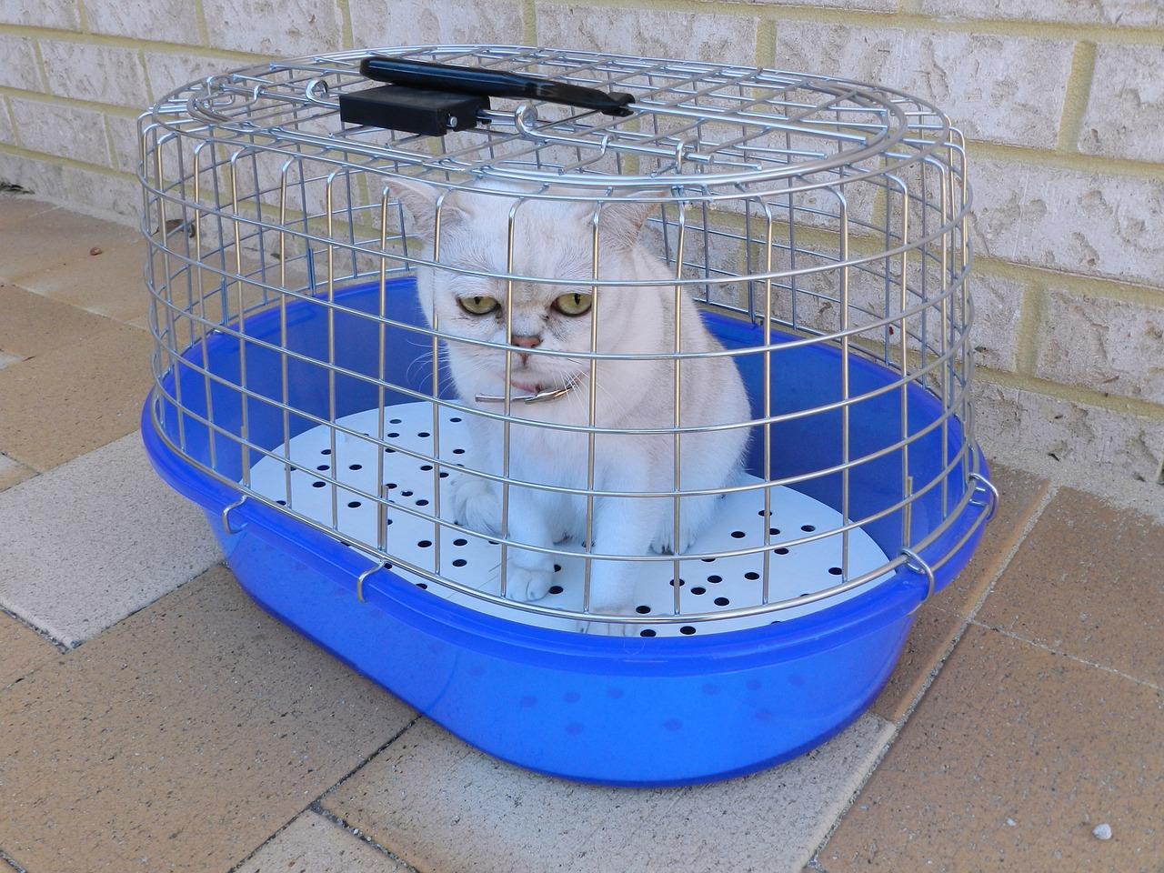 Une cage souple ou en plastique