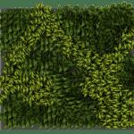 brise vue végétal